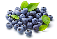 Eating Blueberries Reduces the Risk of Tooth Deca