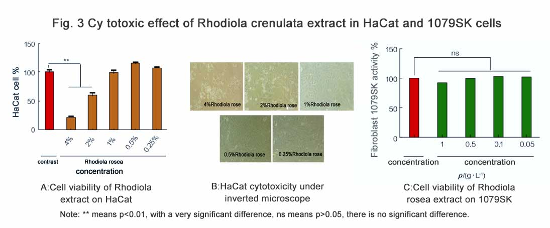 Fig. 3 Cy totoxic effect of Rhodiola crenulata extract in HaCat and 1079SK cells