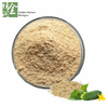Factory Supplier Best Cucumber Seed Extract in Bulk