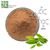 Free Sample 70%-98% EGCG Green Tea Extract Powder