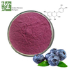 High Quality Bulk Price Blueberry Fruit Extract Powder
