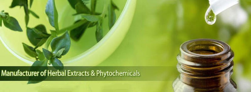 phytochemicals & plant extracts.