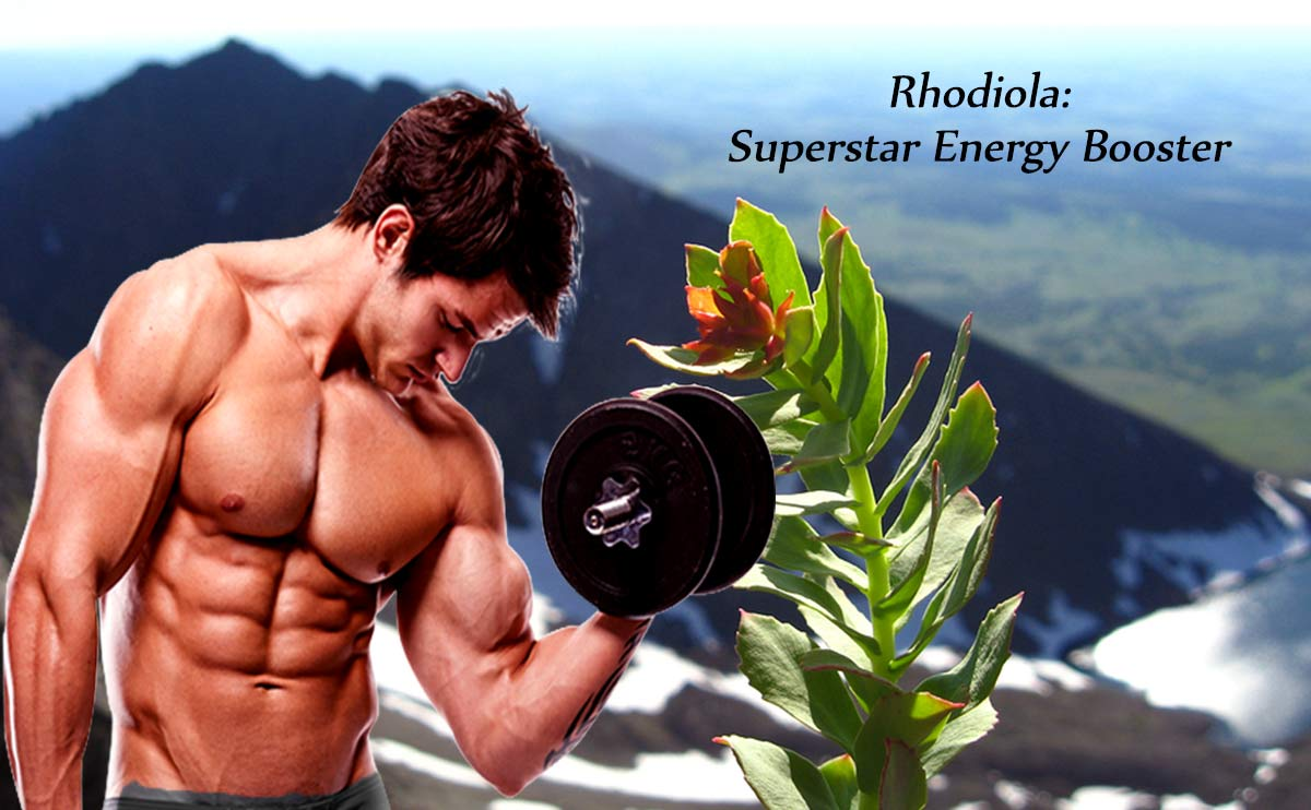 Rhodiola- energy booster