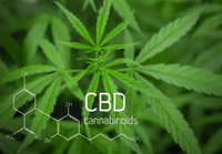 Market Overview and Development Trend of CBD (Cannabidiol)