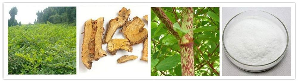 Giant knotweed extract & Resveratrol