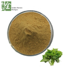 Top Quality Sweet Potato Leaf Extract