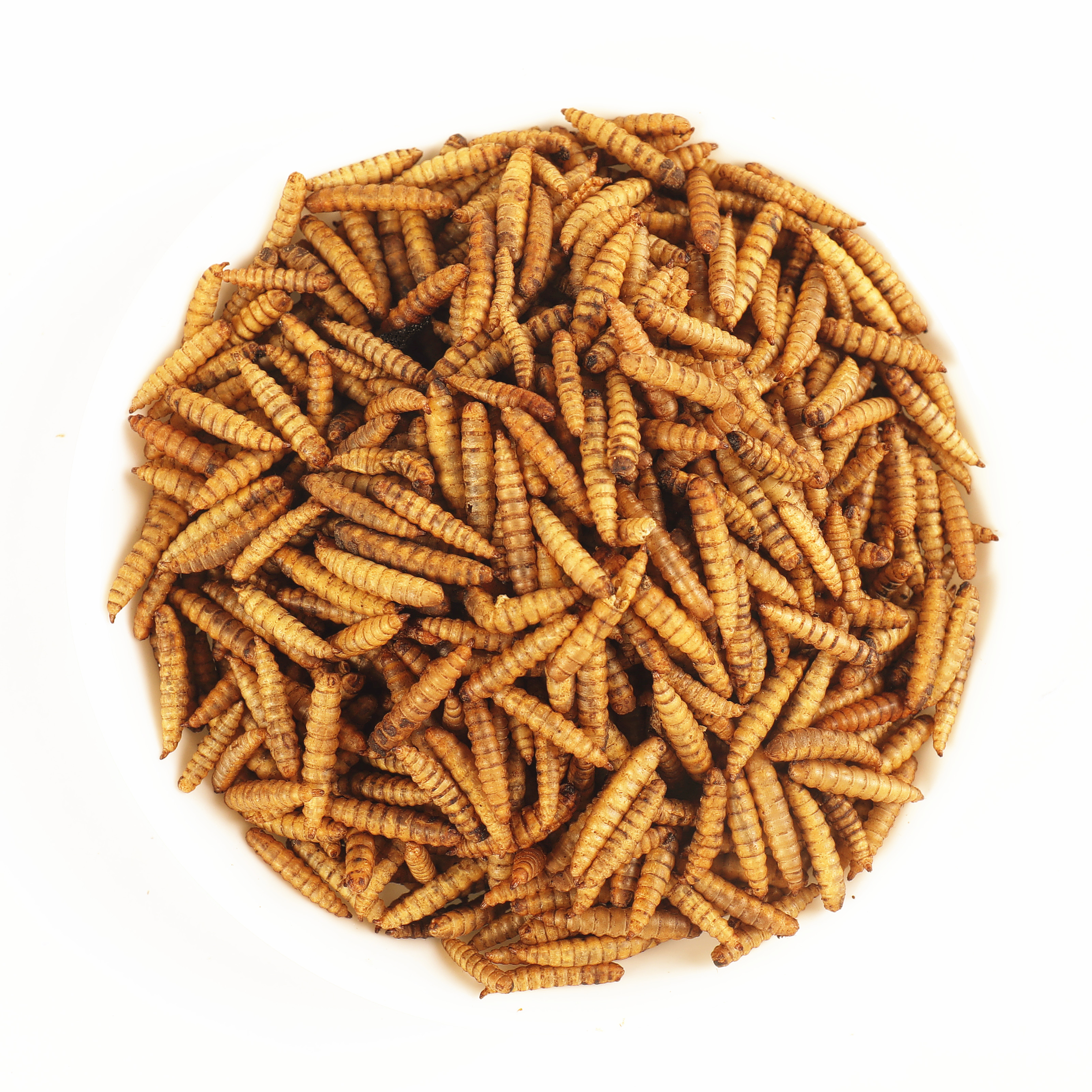 Good China Black Soldier Fly Larvae - Hermetia Illucens